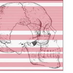 Disegno Anatomico