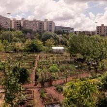 Gli Orti urbani: ritorno alla terra e alla comunità