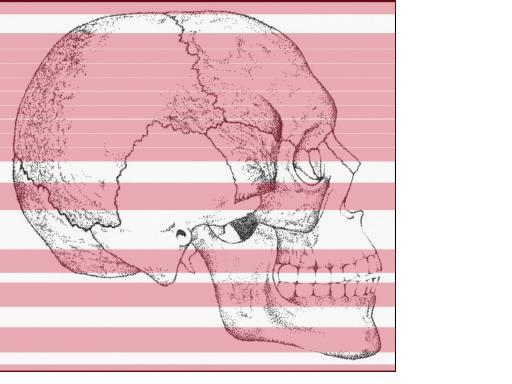 Lezione di anatomia artistica con metodologia innovativa, presso il Corso Disegni tu!!! Punto Formazione Ferrari di Napoli  CORSO DI DISEGNO ANATOMICO  Il corso di disegno anatomico permette a qualsiasi persona di disegnare dal vero ogni parte dello scheletro (osteologia) e di ogni parte della muscolatura (miologia)  del mondo animale.